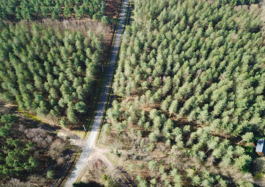 Forêt de Pins en Indre-et- Loire