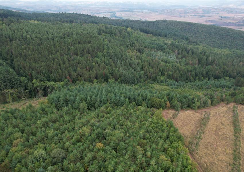 Domaine forestier en Aveyron