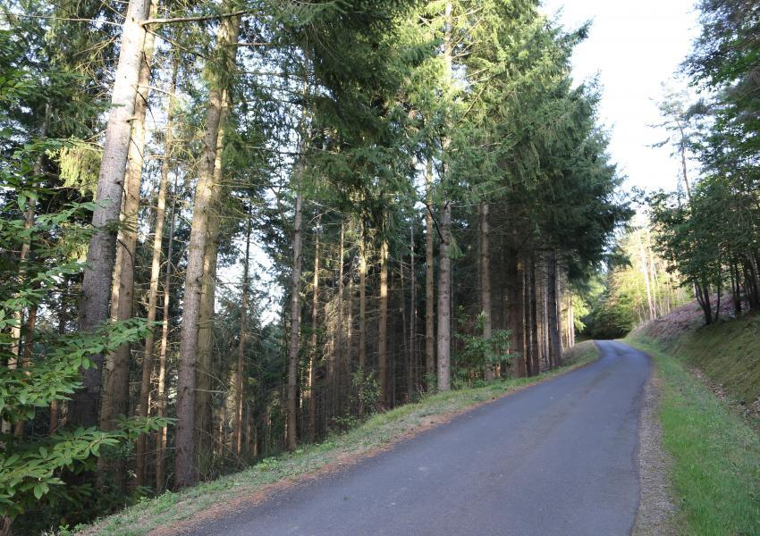Forêt de production à vendre composée de bois d'œuvre et de bois de chauffage.