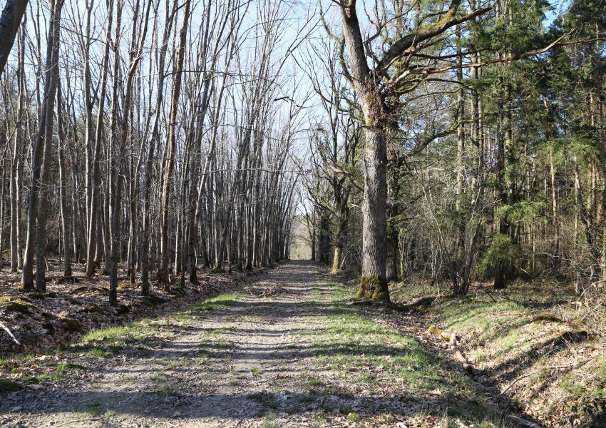 Domaine de chasse de 345 ha en sologne Bourbonnaise