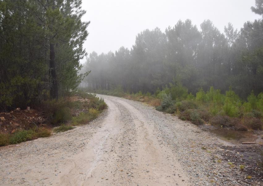 Forêt au centre du Portugal