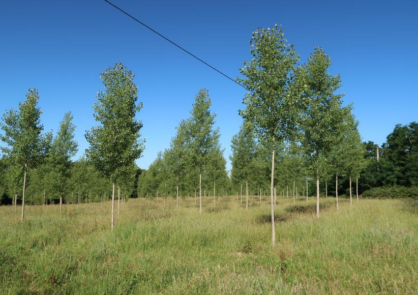 Forêt à vendre en Campagne d'Armagnac