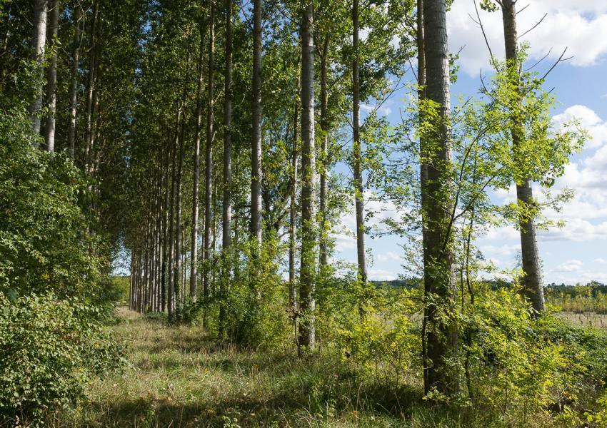 Propriété forestière bâtie en Dordogne