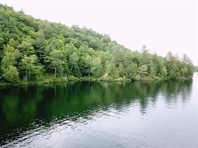 Forêt en bordure du Lac Rhéaume