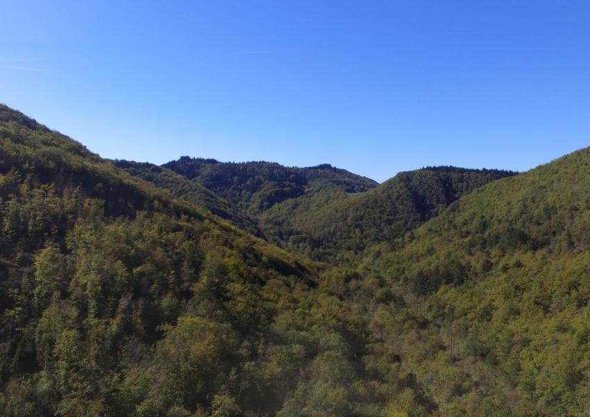 Forest estate in Aude