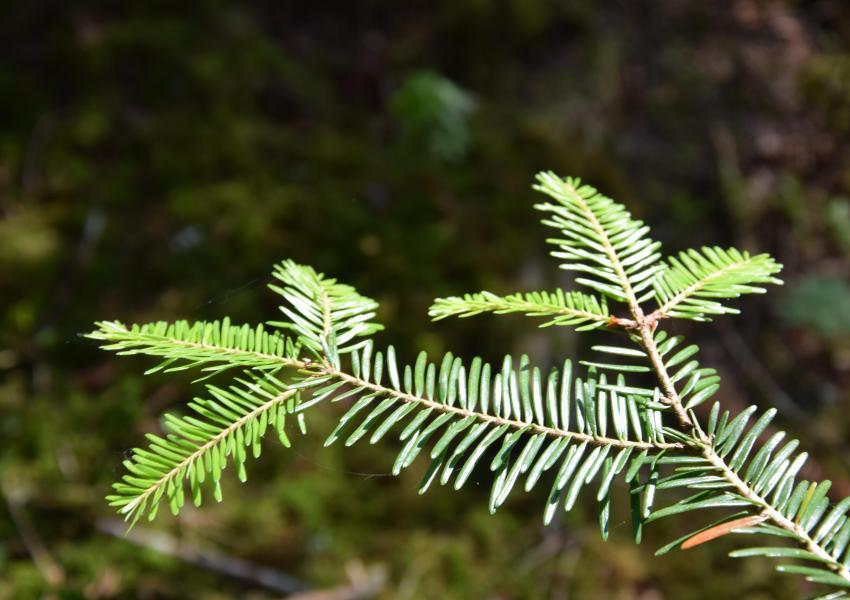 Propriété forestière dans le Cantal