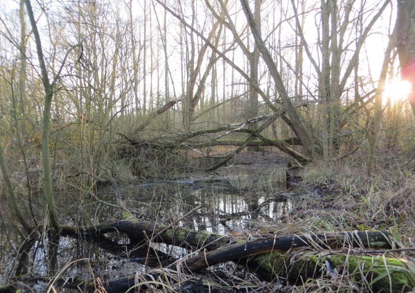 Bois, étang, marais à vendre dans le Nord-Pas-de-Calais