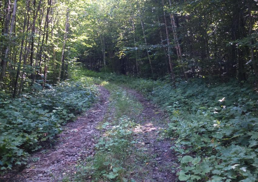 Domaine forestier bâti proche de Mandeville