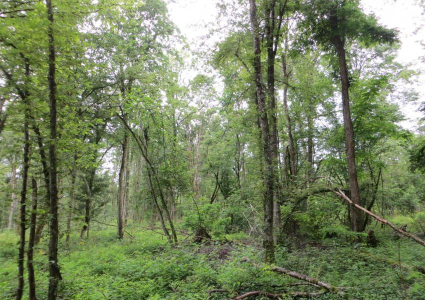 Forêt dans la région Grand Est