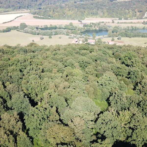 Forêt de Production en Seine-Maritime