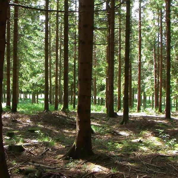Chalets et droits à construire, au milieu de la Forêt