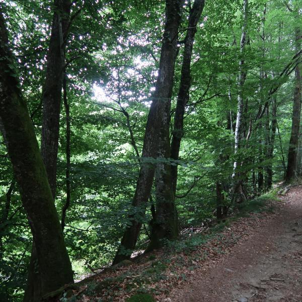 Forêt de production en limite de la Haute-Vienne et de la Corrèze