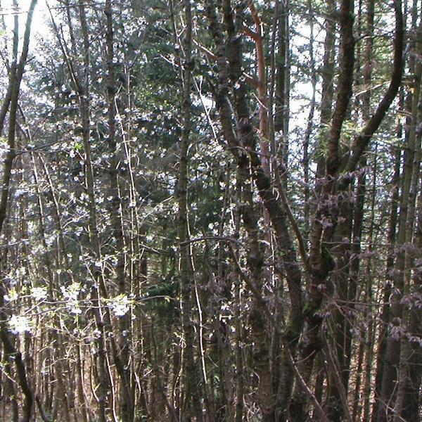 Parcelles forestières à vendre en Ardèche.
