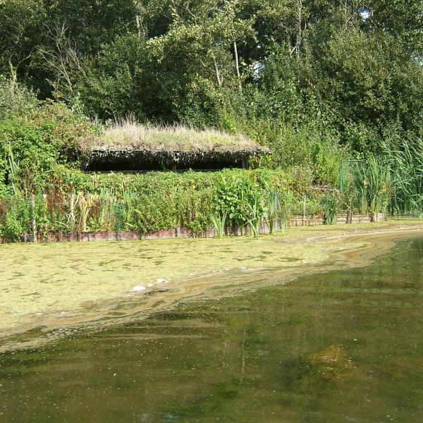 Hutte de Chasse dans les Hauts de France