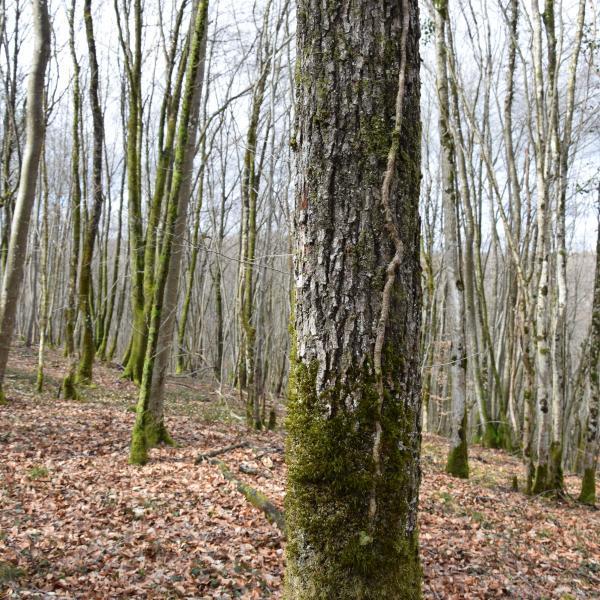 Massif forestier en un seul tenant dans le Grand-Est