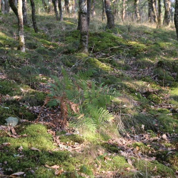 Forêt de loisir avec étang dans le Puy de dôme
