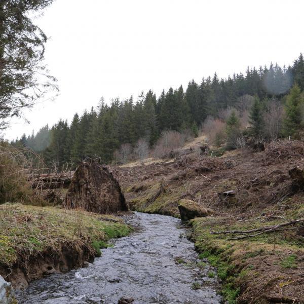 Forêt de production dans le Puy de Dôme