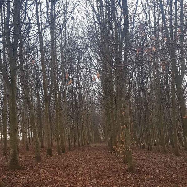 Propriété forestière de Production dans les Hauts de France
