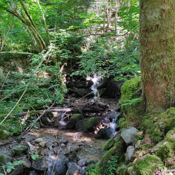 Forêt de Production en Isère dans les Alpes