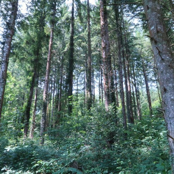 Forêt de production diversifiée en Haute-Vienne