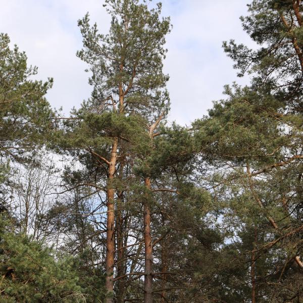 Forêt de loisir à vendre dans le puy de dôme