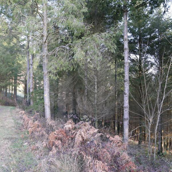 Parcelles forestières groupées en Aveyron