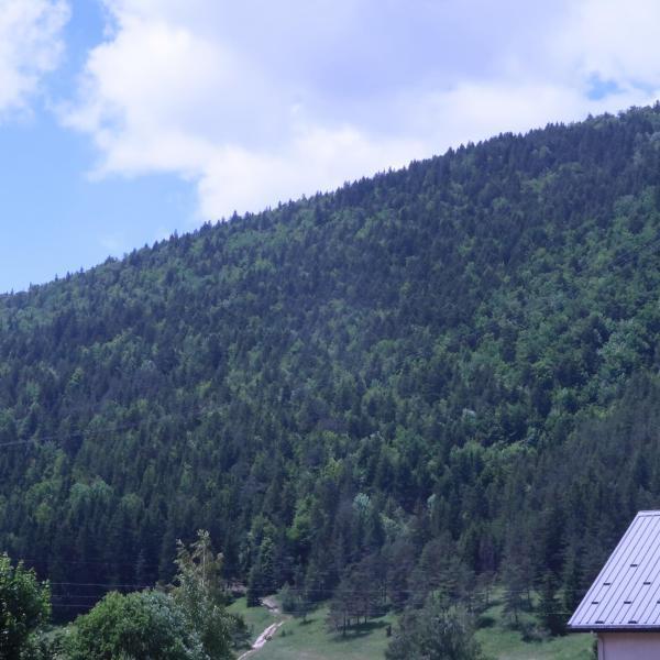 Forêt de production en Isère