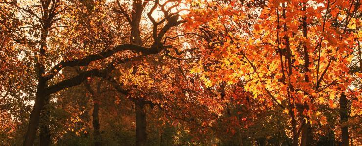Ile de France - Des forêts à forte valeur patrimoniale