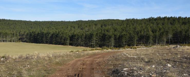 Massif Forestier en Lozère (48)