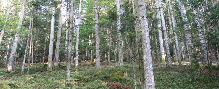 Parcelles forestières dans le Puy-de-Dôme