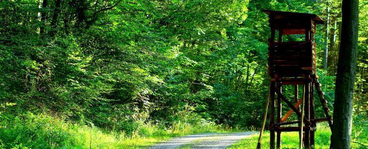 72 Sarthe - Une majorité de feuillus composent les forêts
