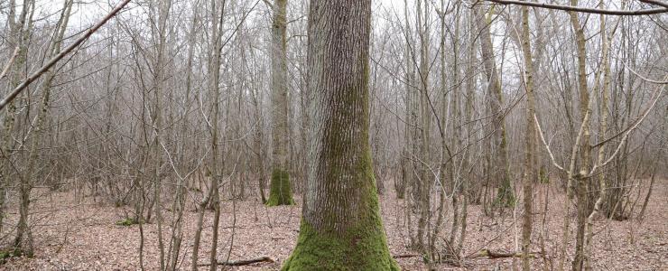 Domaine Forestier en Loir et Cher
