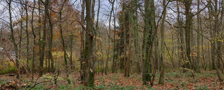 Propriété forestière avec habitation