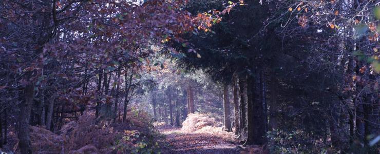 Domaine de chasse en Nouvelle Aquitaine