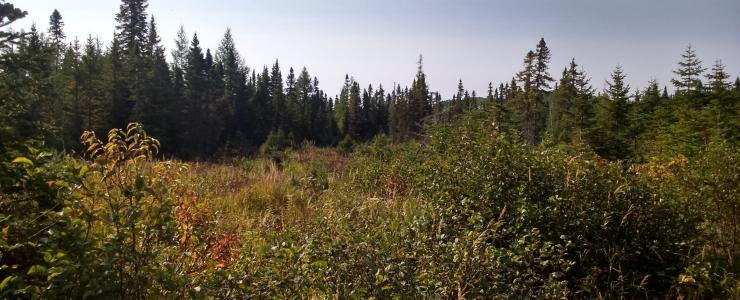 Forest estate near Quebec City