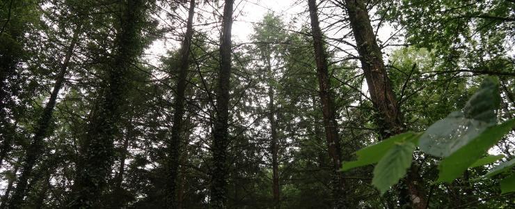 Forêt de production et de loisirs en Haute-Vienne