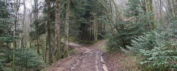 Forêt de production de résineux dans le Jura