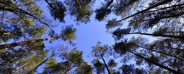 ZNIEFF 1 e 2 - Florestas