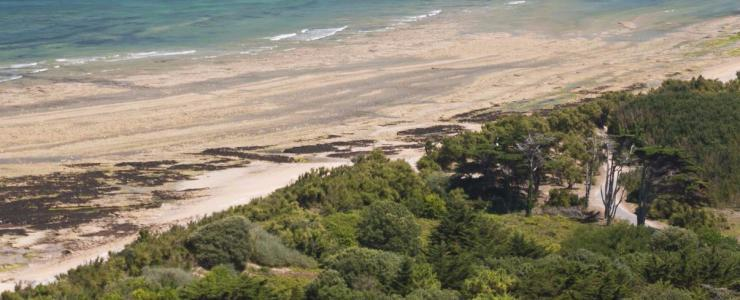 17 Charente Maritime - Une propriété forestière morcelée