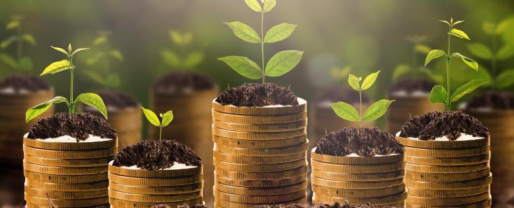 Comment financer sa forêt?