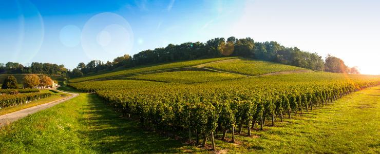 33 Gironde - Un département forestier de premier plan