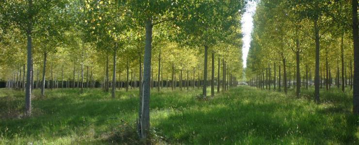Propriété Forestière dans le Gers