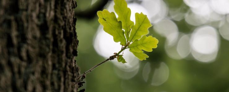 Bourgogne Franche-Comté- Une économie du bois dynamique