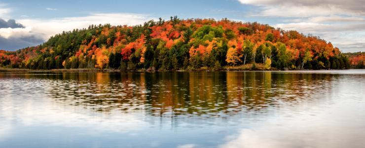 Comment gère-t-on la sylviculture au Québec ?