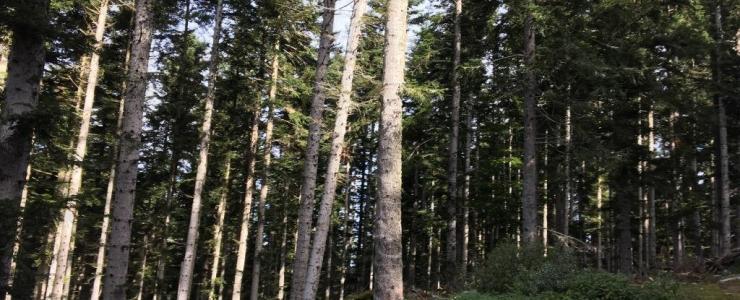 Une nouvelle forêt pour Groupama Immobilier