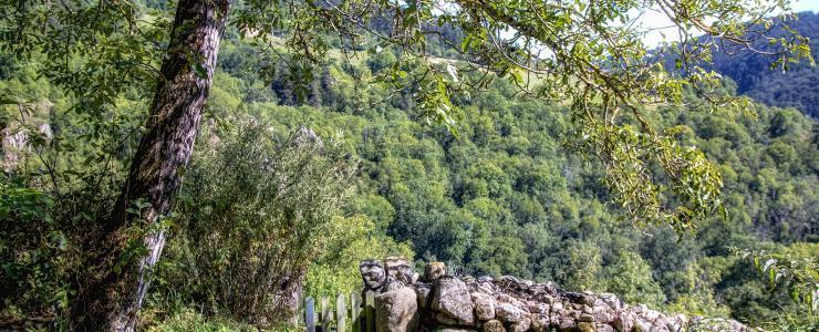 43 Haute Loire - Une diversité propice à la vente de forêts
