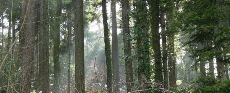 Forest estate in Ardèche