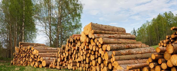 Comment bien choisir le mode de vente pour ses coupes de bois ?
