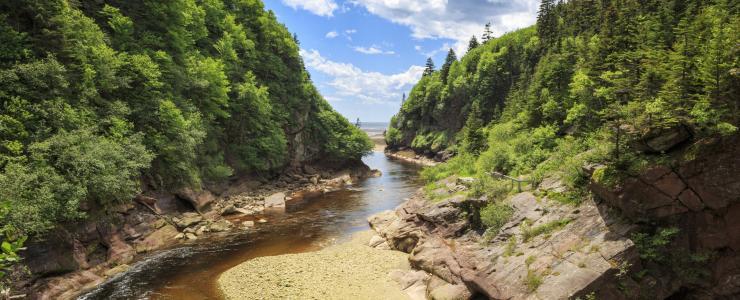 Investir dans la Forêt Acadienne