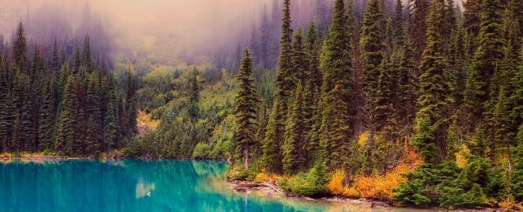 La Forêt Boréale, le type forestier le plus étendu au Québec